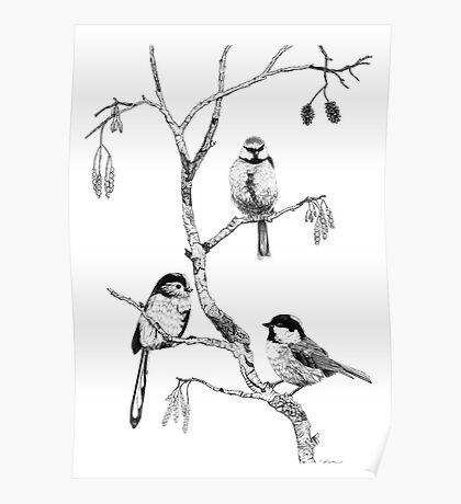Small Garden Birds Poster