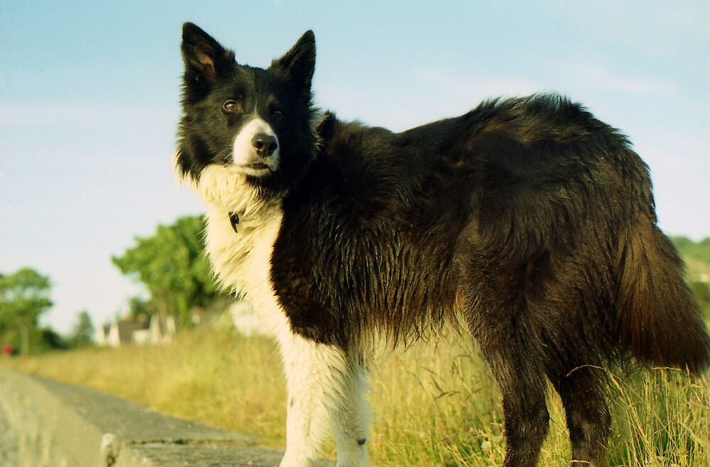 10 Things Your Dog Would Tell You....  by Michael Haslam