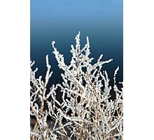 icy twigs and branches in snow against blue Photographic Print