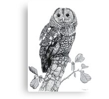 Tawny Owl (cropped version) Canvas Print