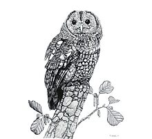 Tawny Owl (cropped version) Photographic Print