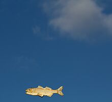 Fish Fly by Lynn Wiles