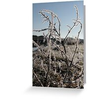 icy twigs and grass in snow against blue river and sky Greeting Card