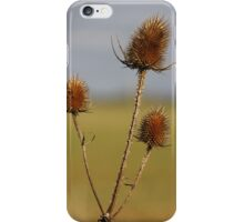 Autumn Sunshine iPhone Case/Skin