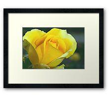 Rose of hope Framed Print