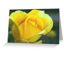 Rose of hope Greeting Card