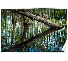 Swampland Louisiana bayou, USA Poster