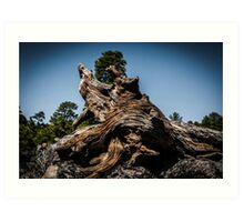 Close up of a weathered, textured tree stump  Art Print