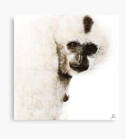 Gibbon #1 Canvas Print