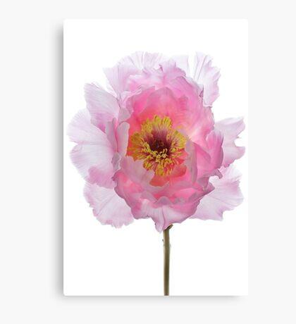 Pink Tree Peony Canvas Print
