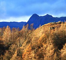 Harrison Stickle from Tarn Hows - Illuminated Pine Forest by rennaisance