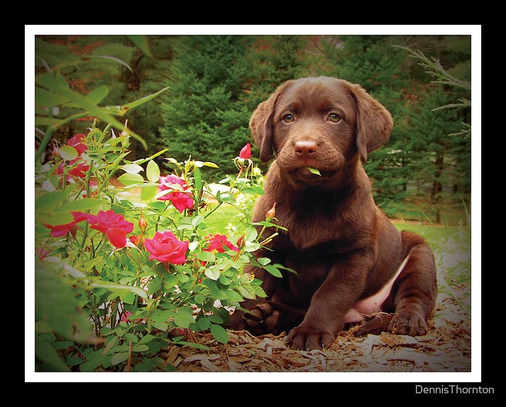Jasper!  Stop that! by DennisThornton