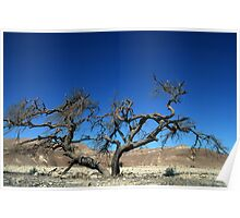 Dead and dry solitary tree in the desert Poster