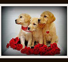 Trio of Roses by DennisThornton