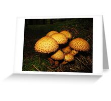 Shaggy Scalycap, Pholiota squarrosa Greeting Card