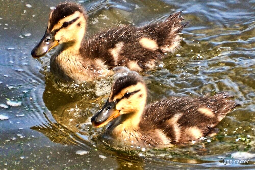 Twin Ducklings  by lynn carter