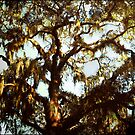 When The Sun Climbs My Branches by Roger Sampson