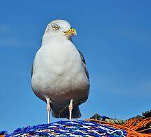 Posing On The Fishing Nets by Susie Peek