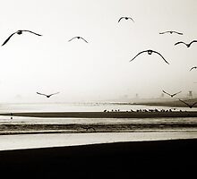 Birds at Newport by A. Duncan
