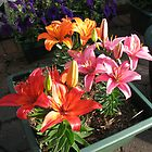 Lilies Soaking Up The Sunshine by kathrynsgallery