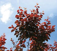 The Upward Reach - Copper Coloured Leaves by kathrynsgallery