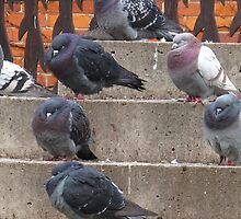 Pigeon stoop by MarianBendeth