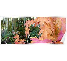 Fall Jungle Poster