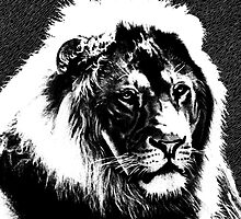 Male Lion Portrait | Black & White Illustration Artwork by Michel Godts