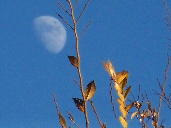 Tree and Moon by Rachel Williams