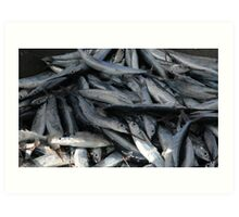 Sardine harvest in St. Lucia Art Print
