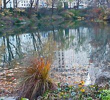 Fall Reflection  by Eugenia Gorac