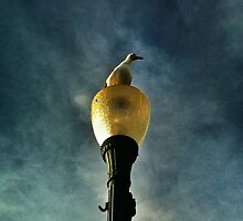 Seagull  by Analia