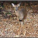 Hello Deer by Mikell Herrick