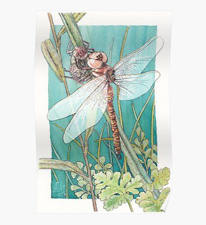 Dragonfly metamorphosis Poster