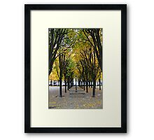 Autum  Framed Print