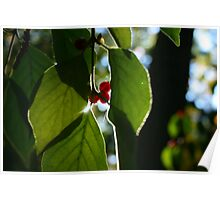Red Berries with Sun Poster