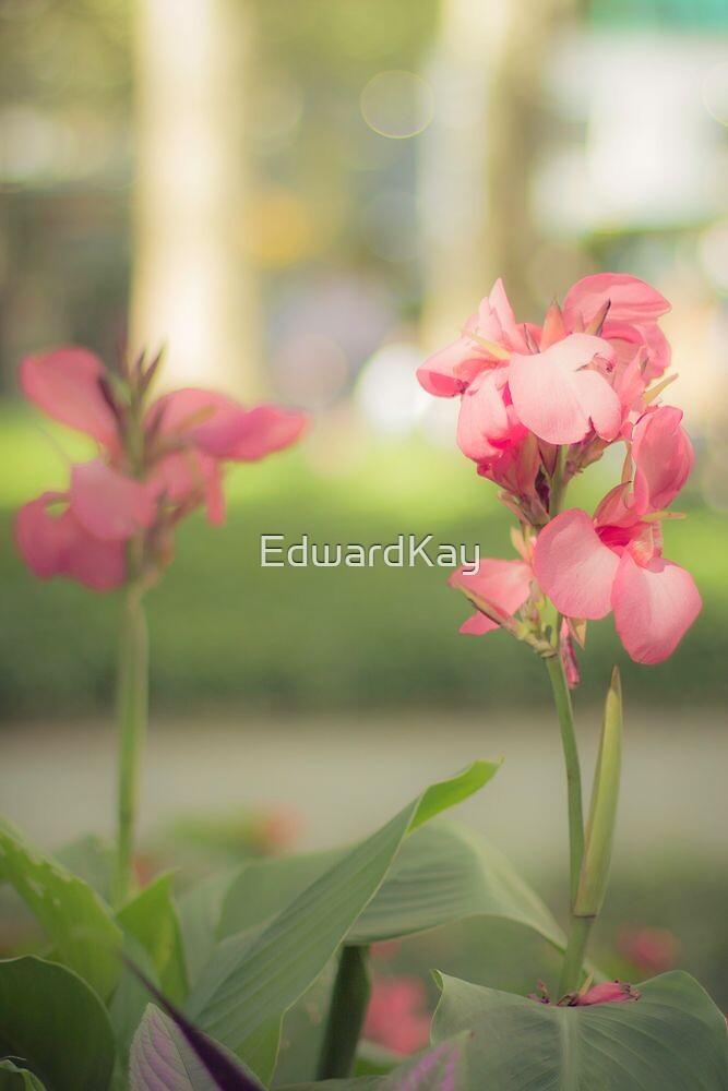 Tender by EdwardKay