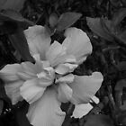 Desert Flower by Socrates & Angela Hernandez