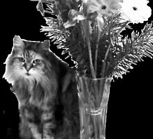 Flowers for Riley by Shelley Milbank