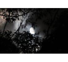 Half Moon Through Trees Photographic Print