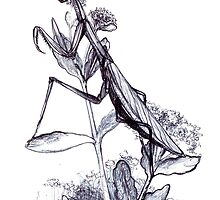 praying mantis hand illustrated schoolbook print by Veera Pfaffli