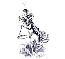praying mantis hand illustrated schoolbook print Photographic Print