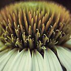 Echinacea by hinomaru