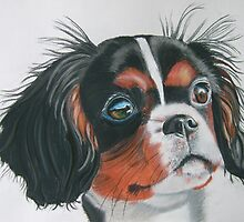 Sandy - King Charles Spaniel Tri Color by mehandi