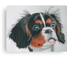Sandy - King Charles Spaniel Tri Color Canvas Print