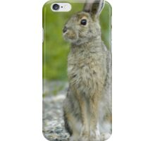 Snowshoe Hare in Alaska iPhone Case/Skin