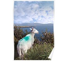 sheeps view of atlantic and mountains of ireland Poster