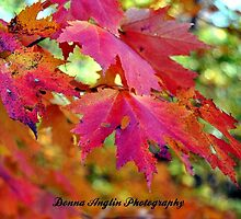 Autumn Colors by Donna Anglin Husband