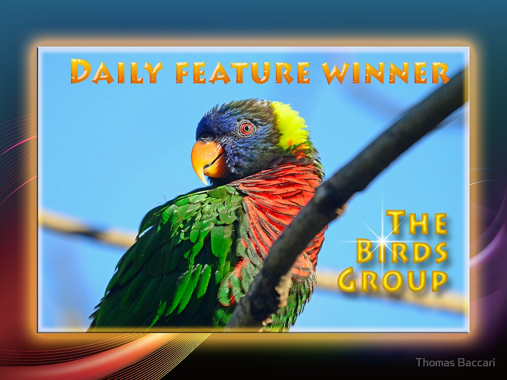 Daily Features Banner _ The Birds Group by TJ Baccari Photography