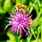 Buzz Buzz Little Bee... ❋ by lewismdesigns